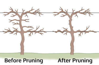 pruning clients